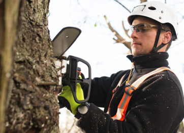 Benefits of Hiring a Toronto Arborist to Care for Your Trees