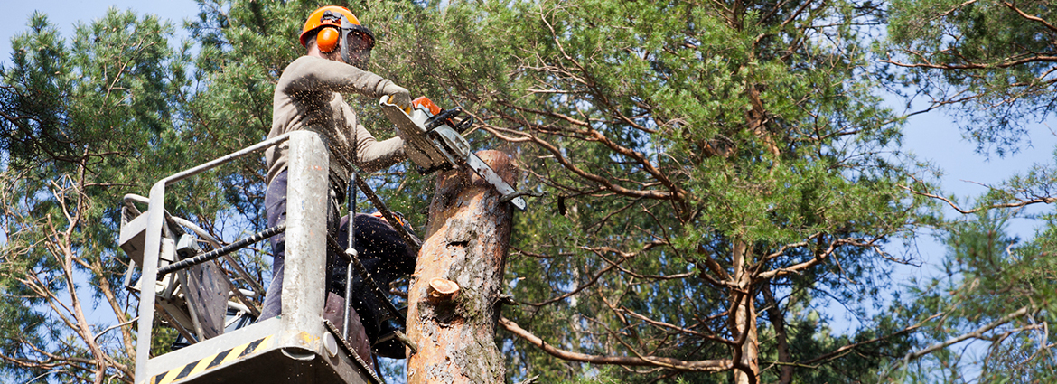 How to Prevent Pests from Damaging Trees