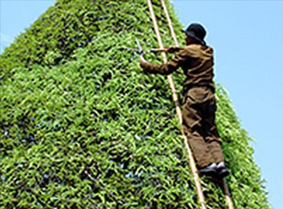 Worker Pruning Tree
