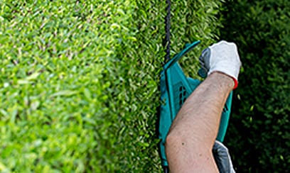 Worker Trimming Shrub