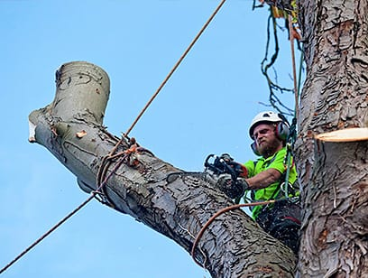 Focus on Tree Care