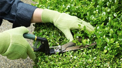 Important To Learn How to Prune and Trim