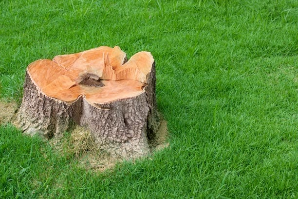 Reasons Stump Removal Is Best Left to Professionals
