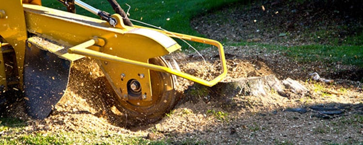Lot Clearing Services in Ontario