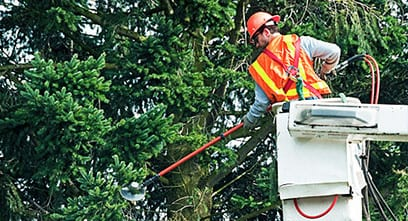 Bucket Truck Services for Tree Trimming and Removal