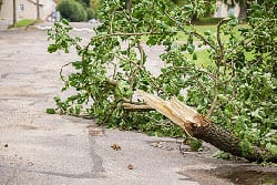 Caring for Your Trees: Tree Removal After Storm