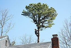 Using Tree Care Services to Plan Ahead for Spring