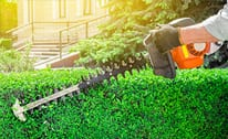 Hedge Trimming/Shrub Care