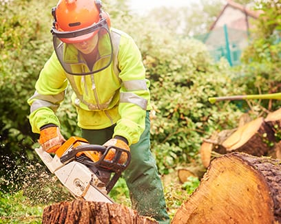 Arborist Services for Residents of Port Perry