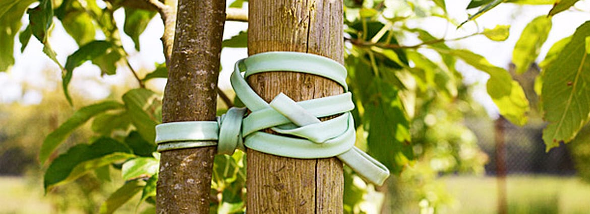 Protect Trees from Damage with Cabling & Bracing