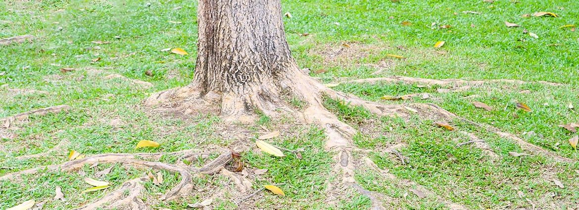How to Safely Cut Tree Roots