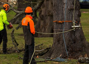 Questions to Ask Before Opting for Tree Removal