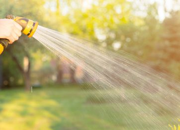 When Should You Water Your Trees in Fall?