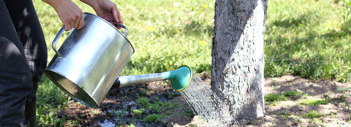 Things to Consider When Watering Trees in the Fall
