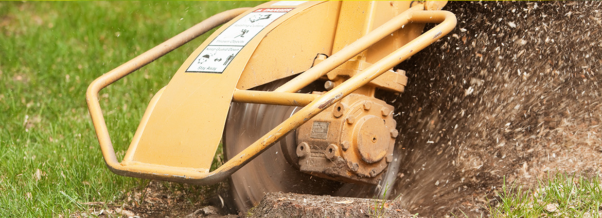 Stump Grinding in Toronto