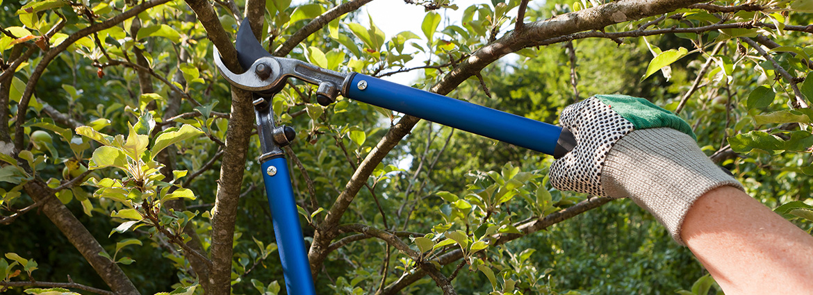 Best Services for Tree Pruning in Toronto