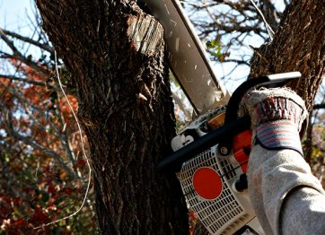 Tree Removal Do's & Don'ts that You Must Know