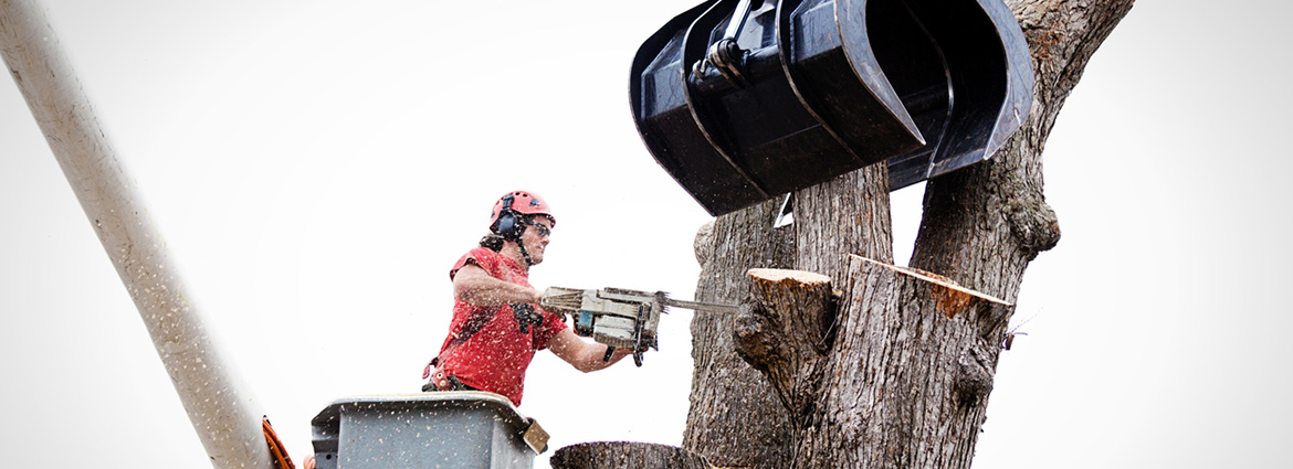 Do's & Don'ts of Tree Removal to Enhance Safety & Efficiency