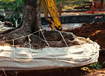 When Should You Consider Tree Removal?