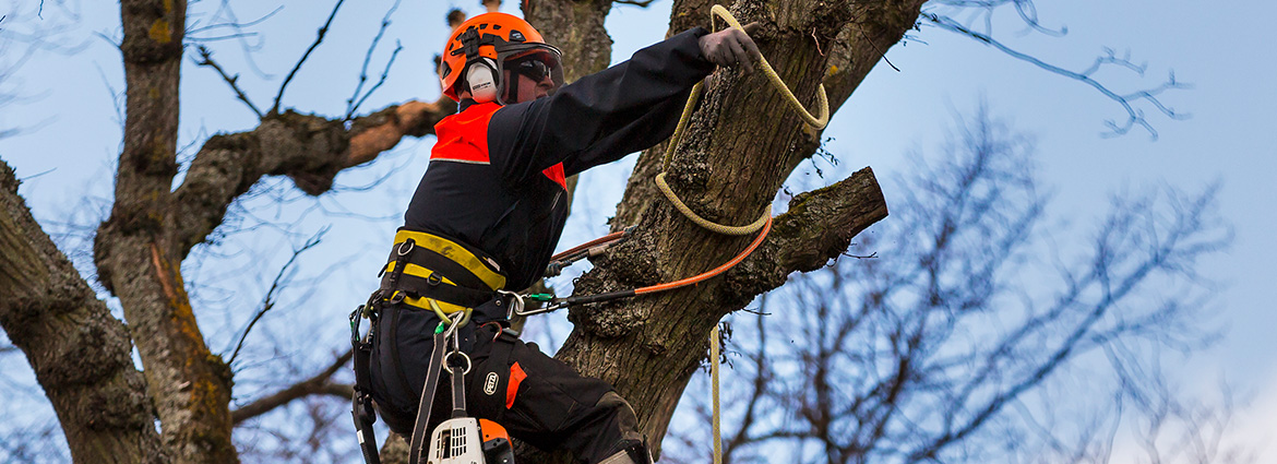 Tree Removal in Toronto