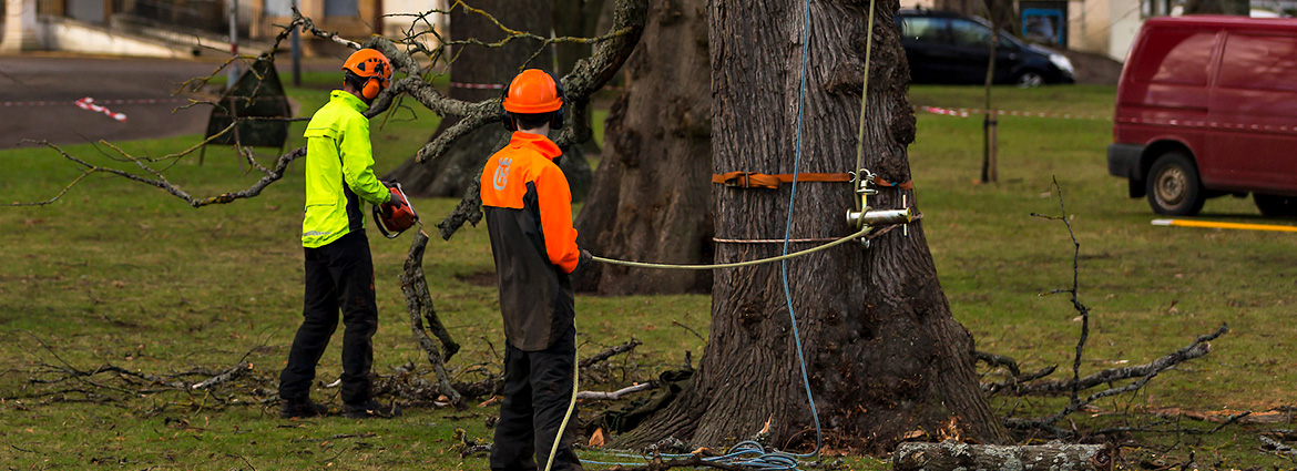 Tree Removal Services in Toronto