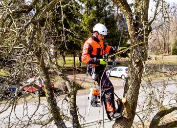 6 Signs that Indicate Your Trees Need Pruning