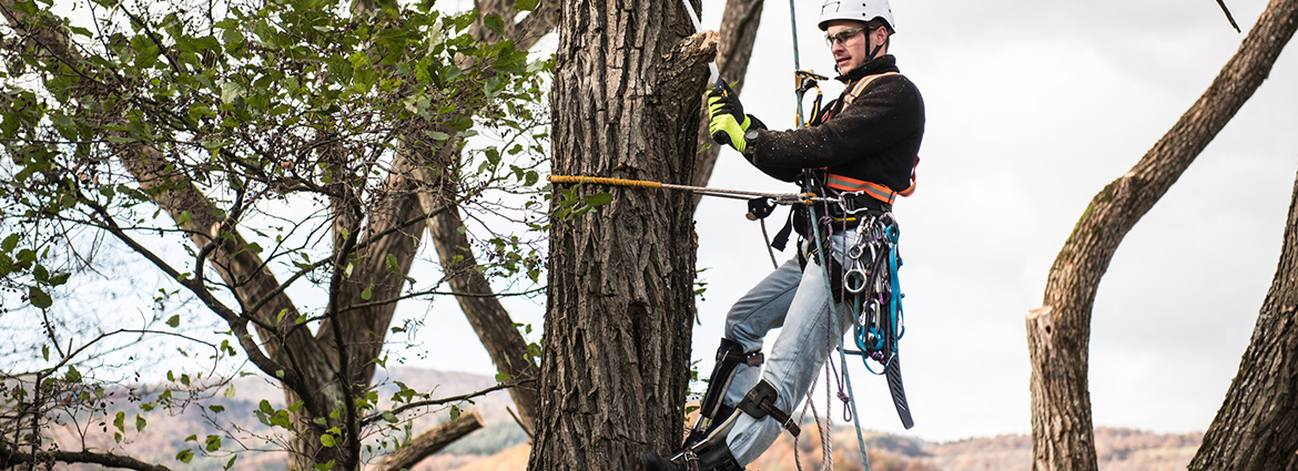 Quick & Affordable Services for Tree Pruning in Toronto