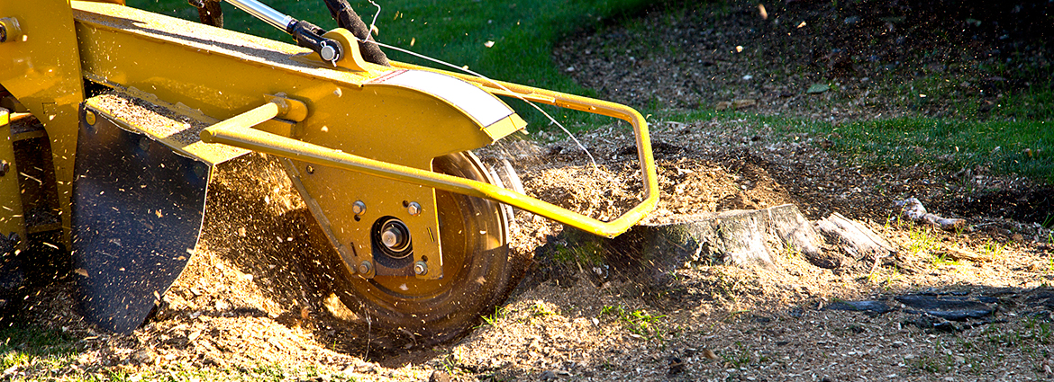 Do's & Don'ts of Stump Grinding You Should Know