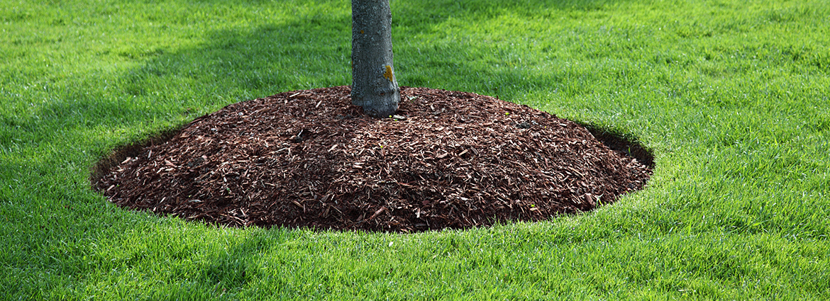 How to Deep Root Fertilize Trees as a Part of Tree Care?