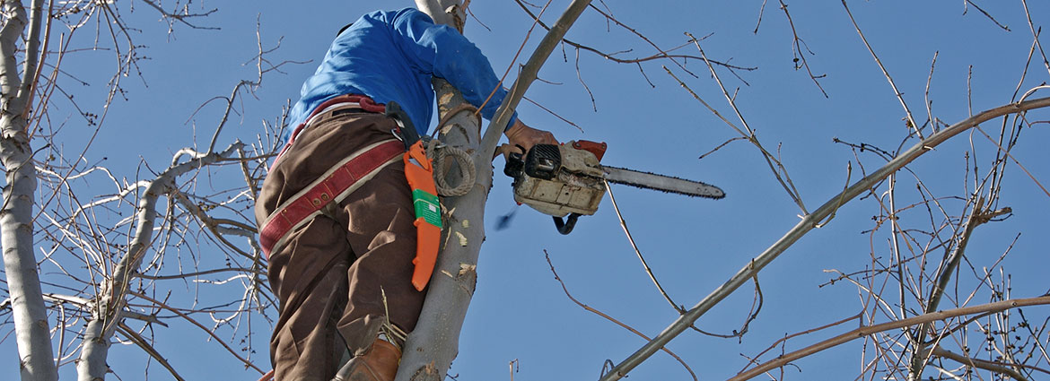 Hedge and Tree Trimming Services in Toronto