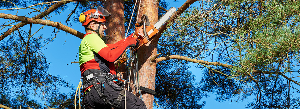 Complete Checklist for Tree Care During the Summer Months
