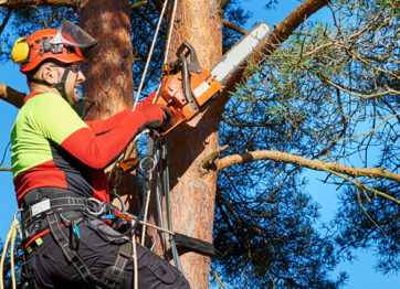 Why You Shouldn't Hire Uninsured & Unlicensed Arborists