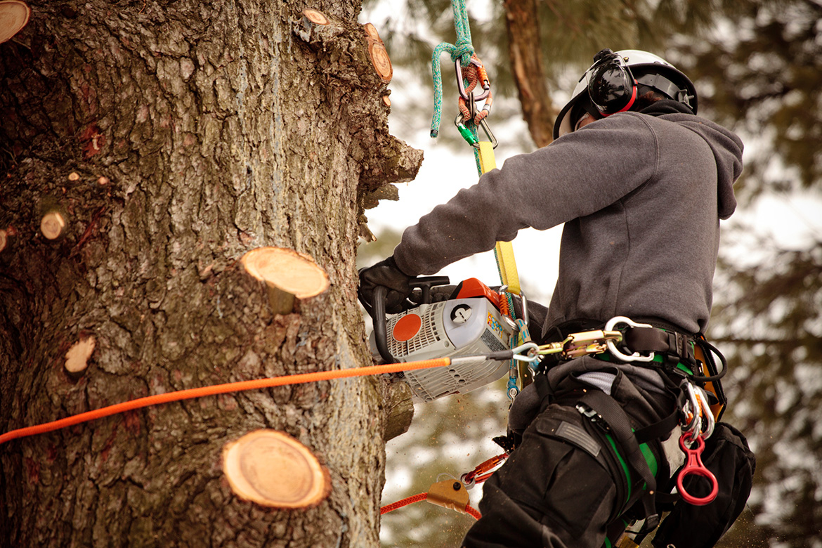 Arborists for Tree Services in Toronto