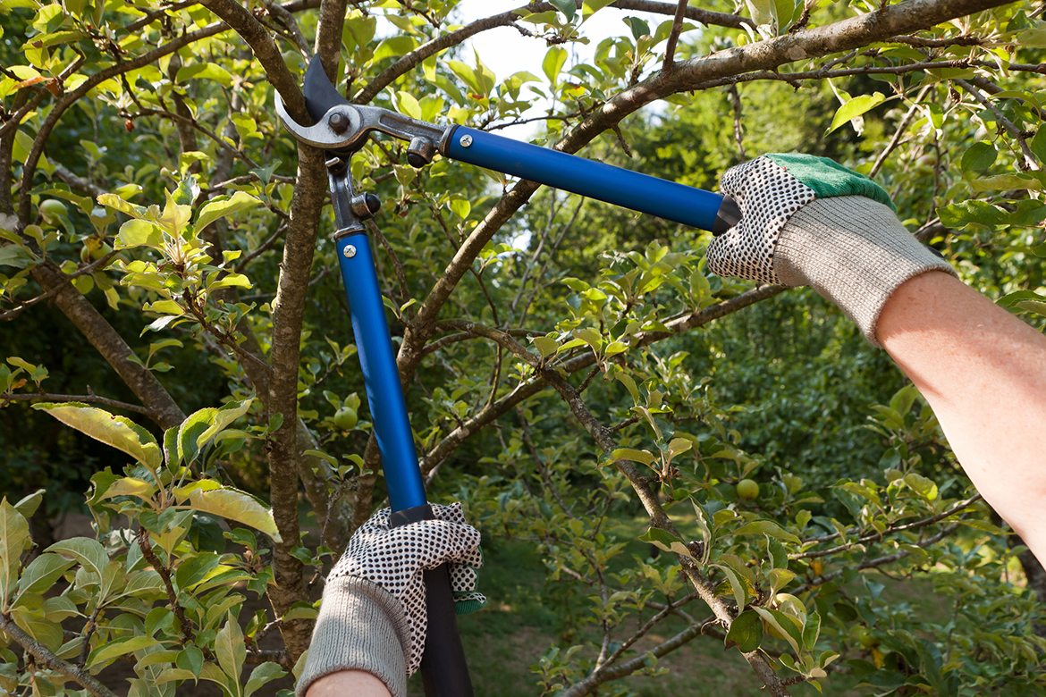 tree and hedge trimming service