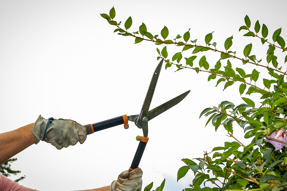 What You Should Know About the Six Most Common Tree Pruning Tools