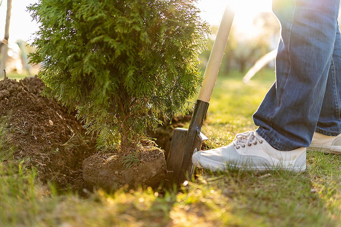 Tree Planting Services in Toronto