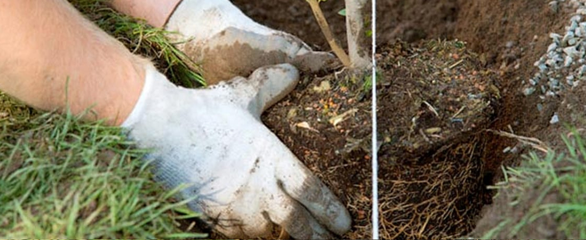 What You Should Know About Tree Planting & Transplanting