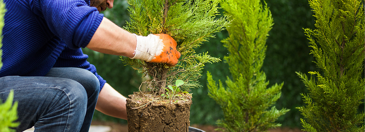Things to Know about Tree Planting and Transplanting