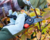7 Common Pests & Tree Care Tips to Prevent Infestation